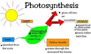 Nota Padat Sains Tingkatan 2 Yang Power Powerschool Learning Sains Tingkatan 2 4 4 Fotosintesis