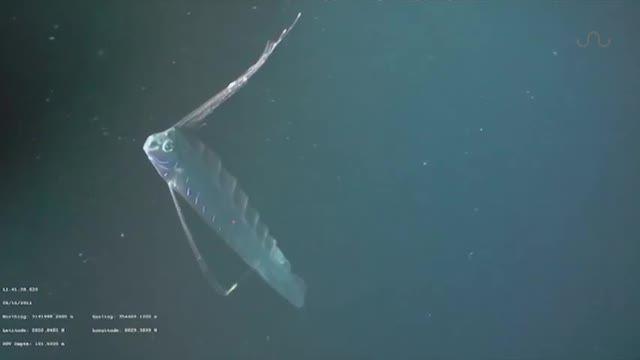 contoh teka teki ikan paling besar yang terbaik untuk para ibubapa