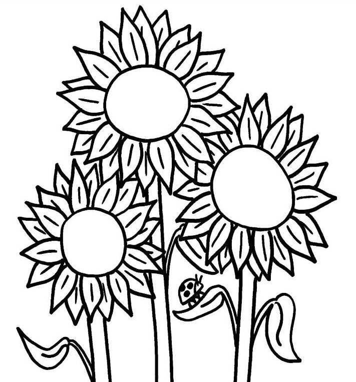 47 gambar bunga matahari untuk mewarnai unik terbaru blog teraktual