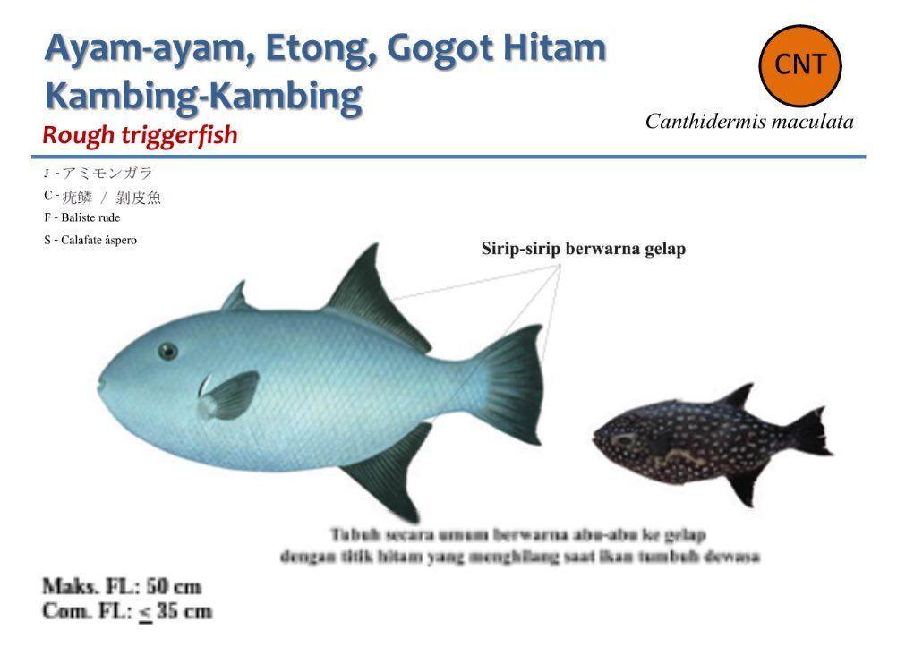 senarai mewarna ikan yang penting dan boleh di cetakkan dengan segera